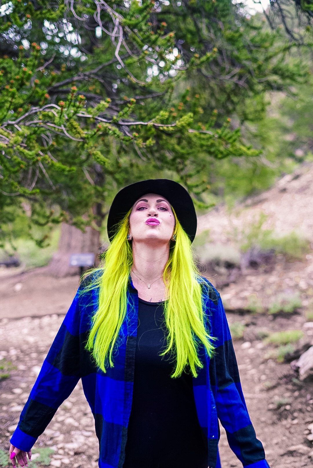 Bristlecone Pine Forrest- California- The Chaos Collective