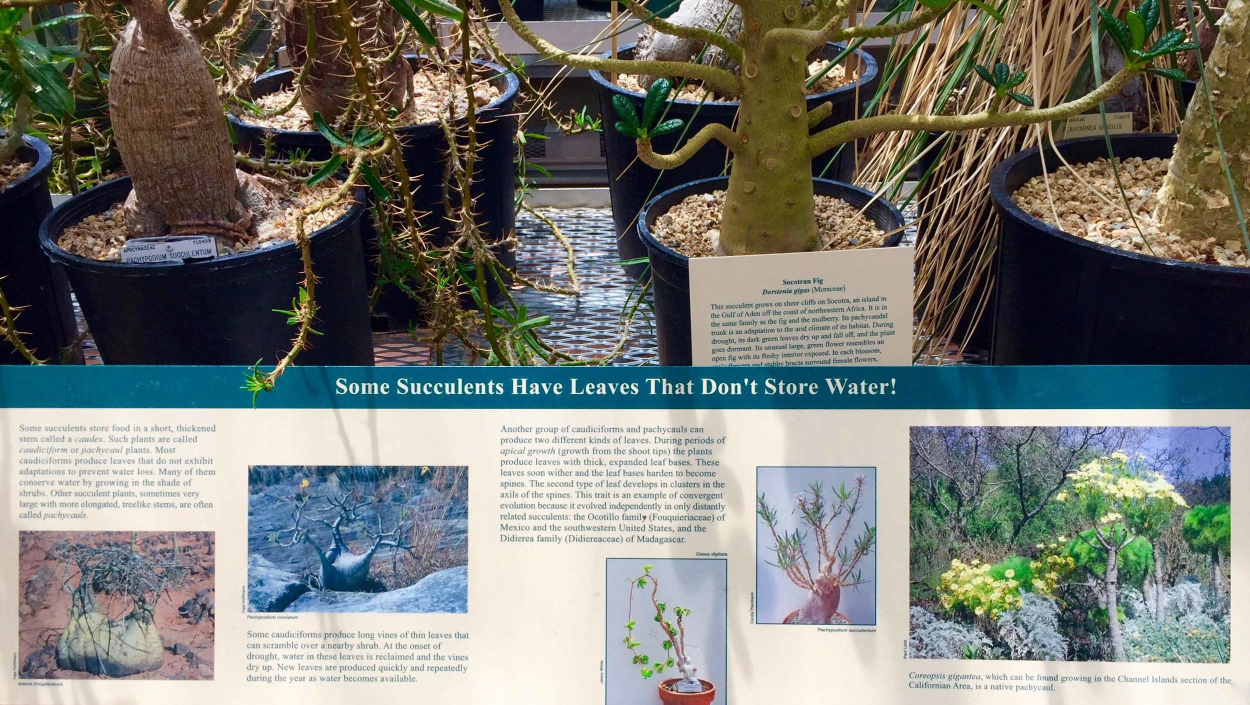 9-University of California Botanical Garden at UC Berkeley-The Sibbett Group-Interpretive Graphics.jpg