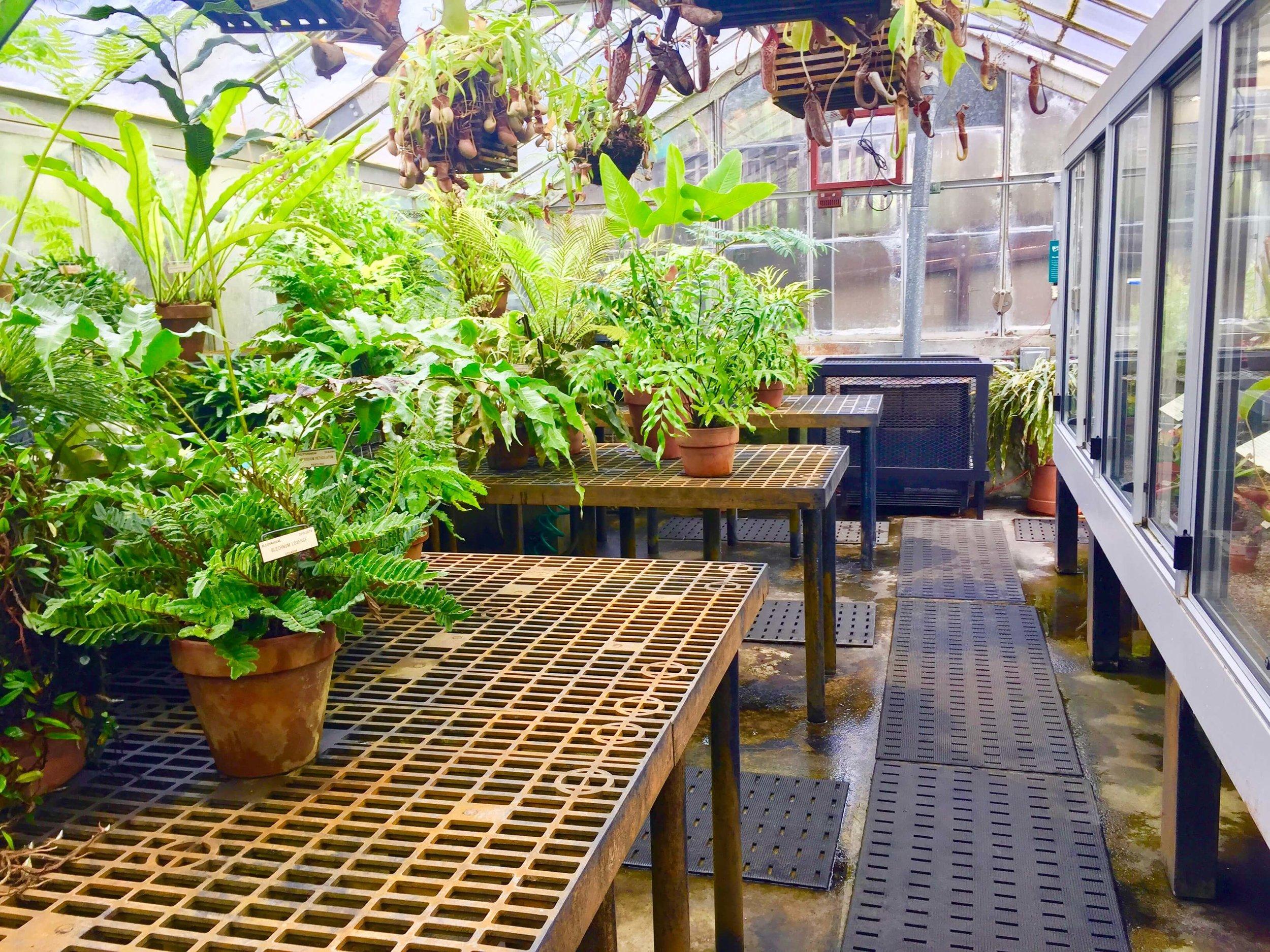 7-University of California Botanical Garden at UC Berkeley-The Sibbett Group-Greenhouse.jpg