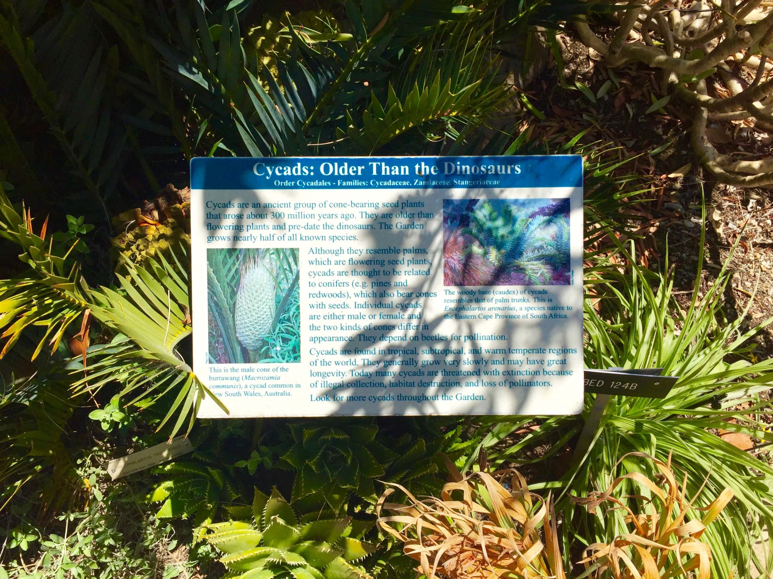 8-University of California Botanical Garden at UC Berkeley-The Sibbett Group-Interpretive Graphics.jpg