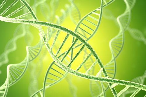 Once activated by proper sensing of oxidative stress, Nrf2 binds to DNA to switch on the expression of over 200 protective genes that encode anti-oxidant and detoxifying enzymes.