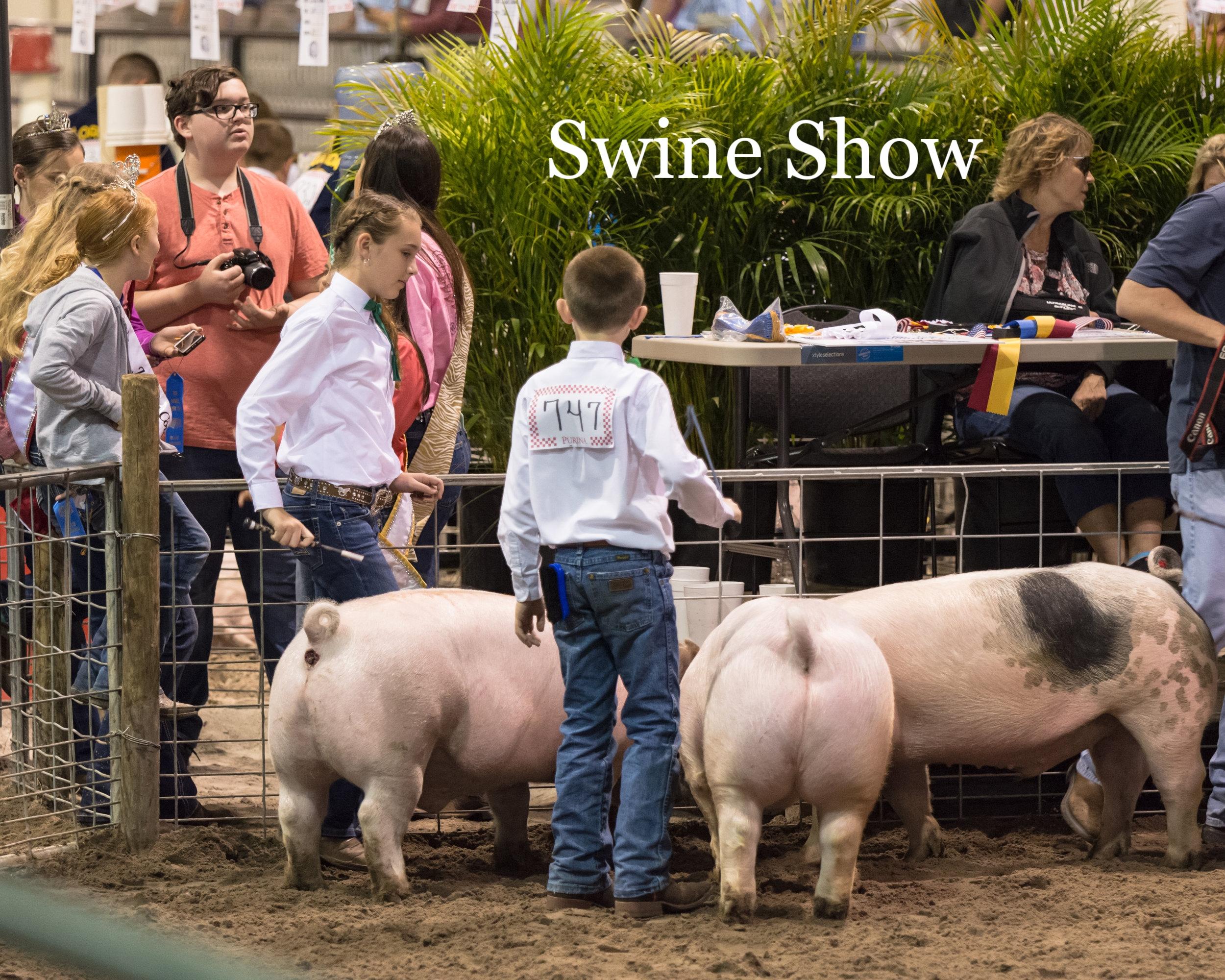 HCF2018 Swine Show
