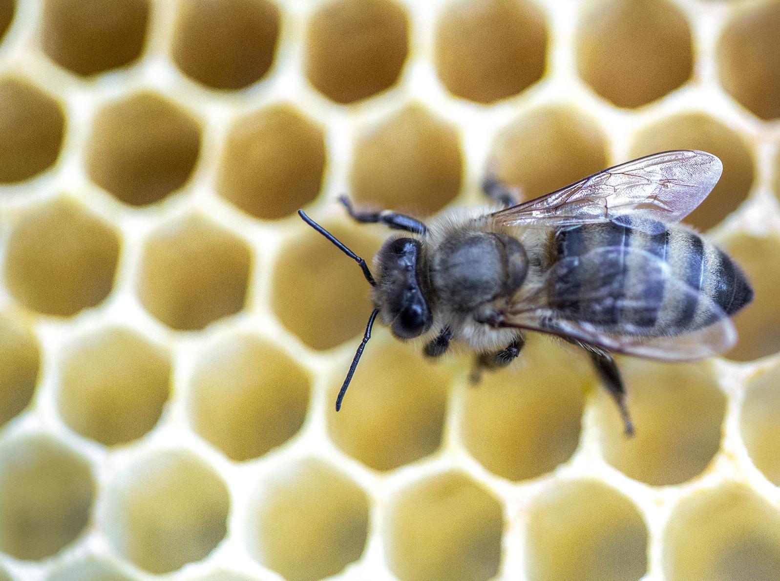 7_5_16 Bees at Hunny Hollow-1828.jpg