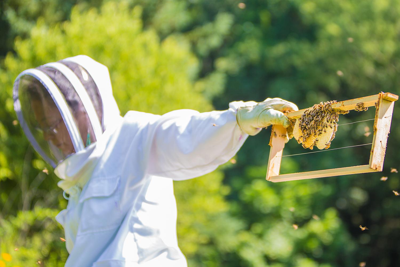 7_29_15 Bees-0738.jpg