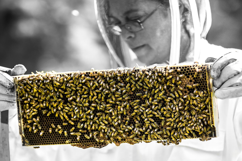7_29_15 Bees-0711-2.jpg