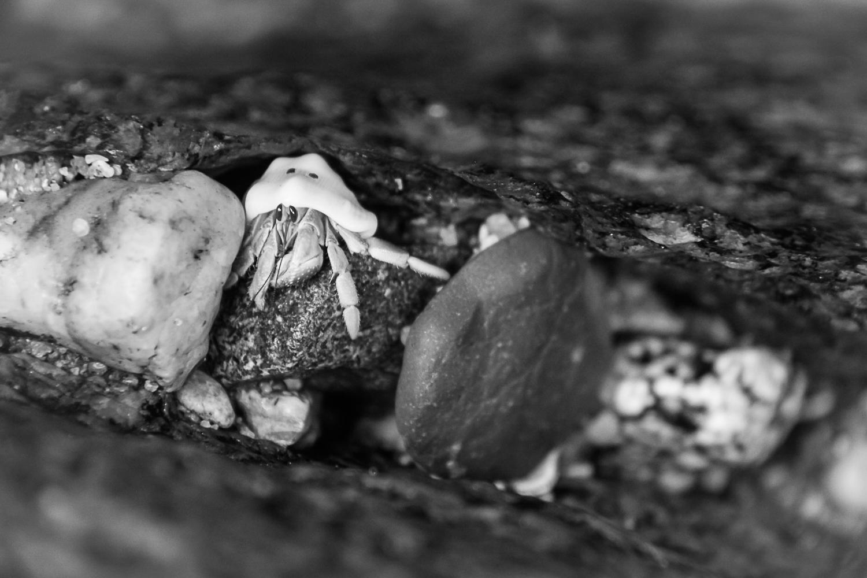 7_21_09 Hermit crab (web)-2.jpg