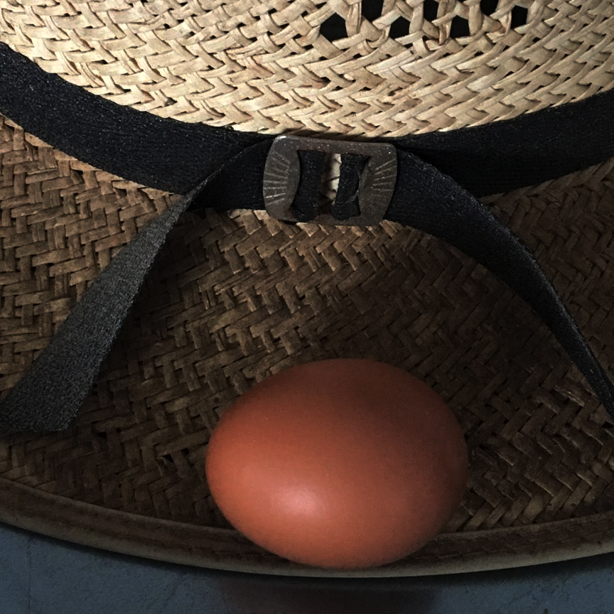 first pasture egg.png