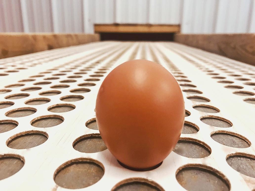 cheyenne-first-egg-2.jpg
