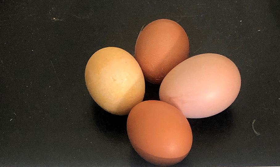 free-range-eggs-2.png
