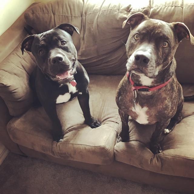 Oreo & Spike