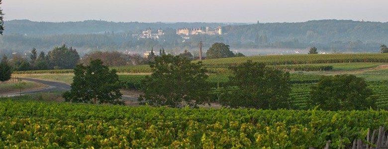 domaine-vieil-ormes-vignobles-touraine-chenonceaux-vins-val-de-loire-780x300.jpg