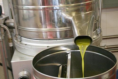 olivenoel 1.jpg