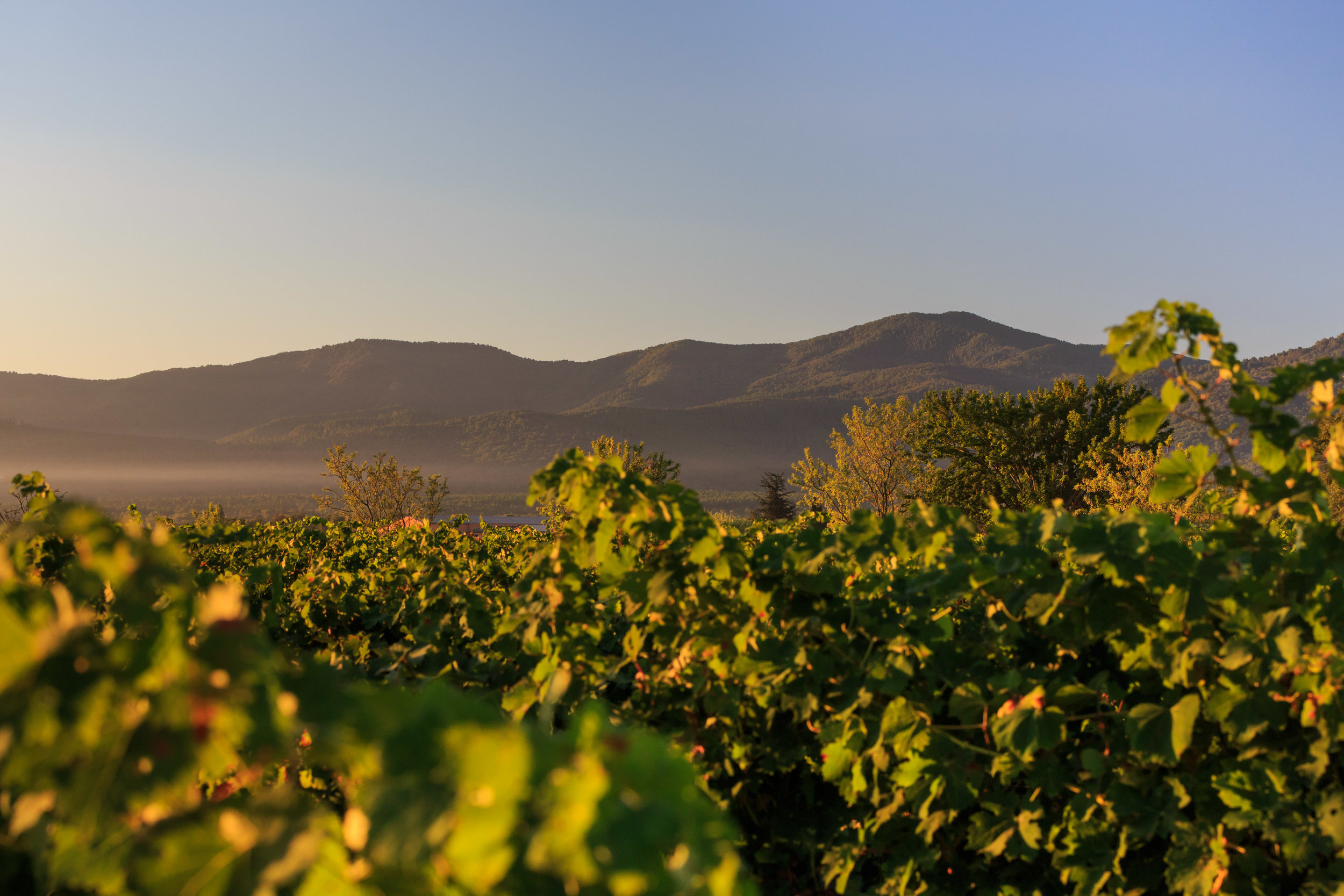 Chateau de brigue vineyard photo 1.jpg