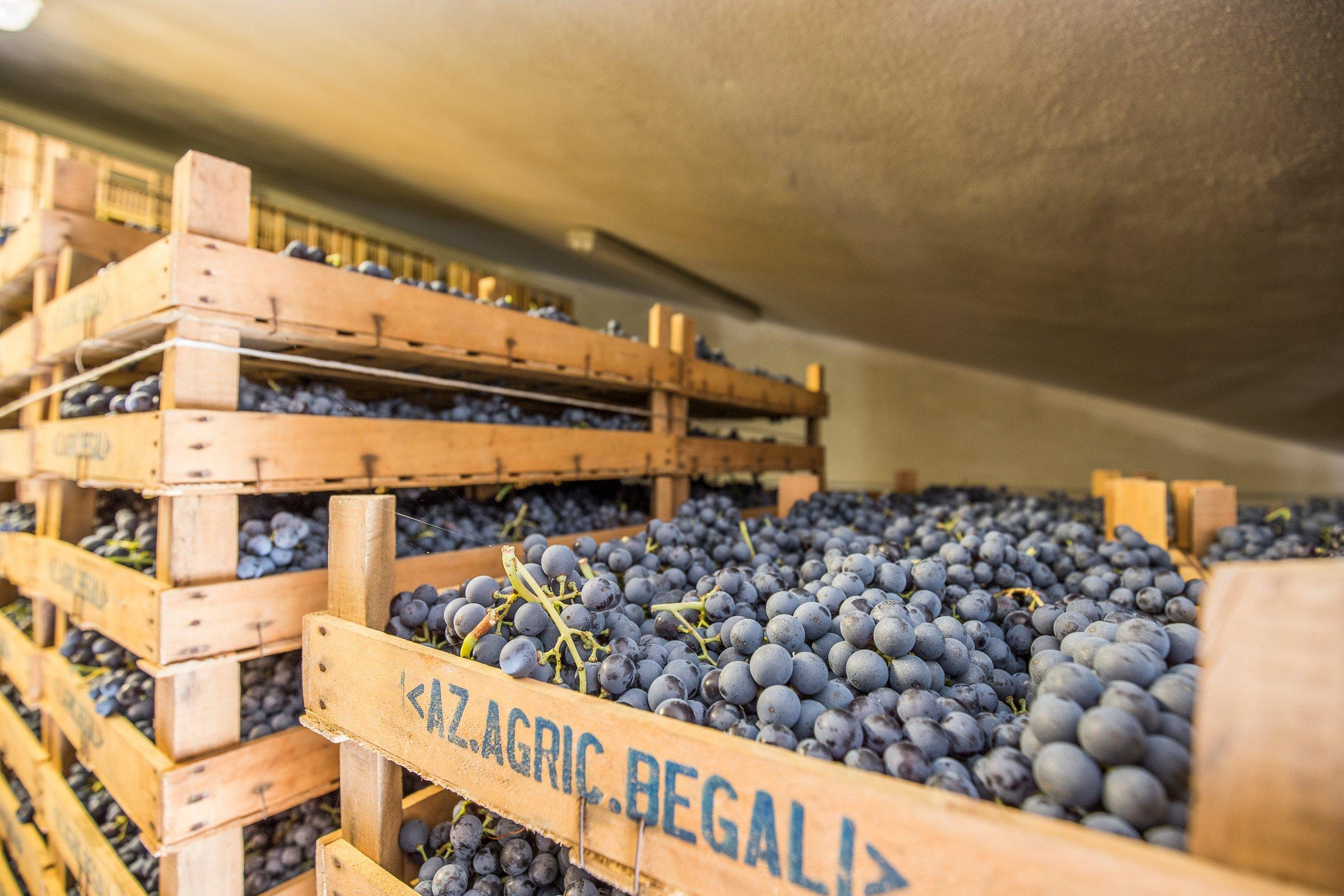 Begali grapes photo 1.JPG