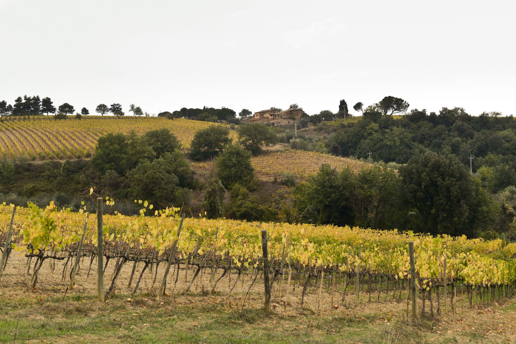 Scopone vineyard photo.jpg