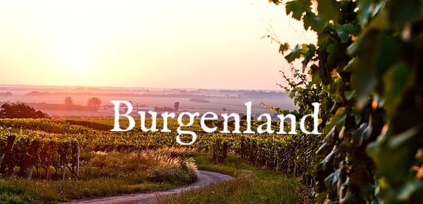 weinberg2--sonnenland-mittelburgenland-o.jpg.3043678.jpg