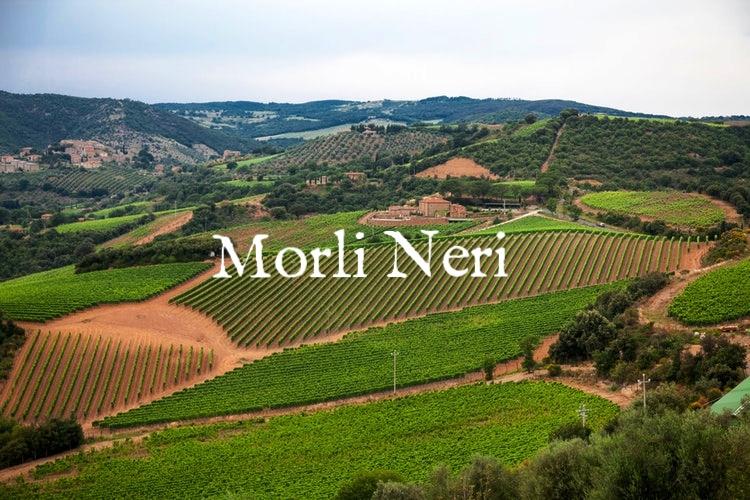 vineyards-chianti-hills.jpg