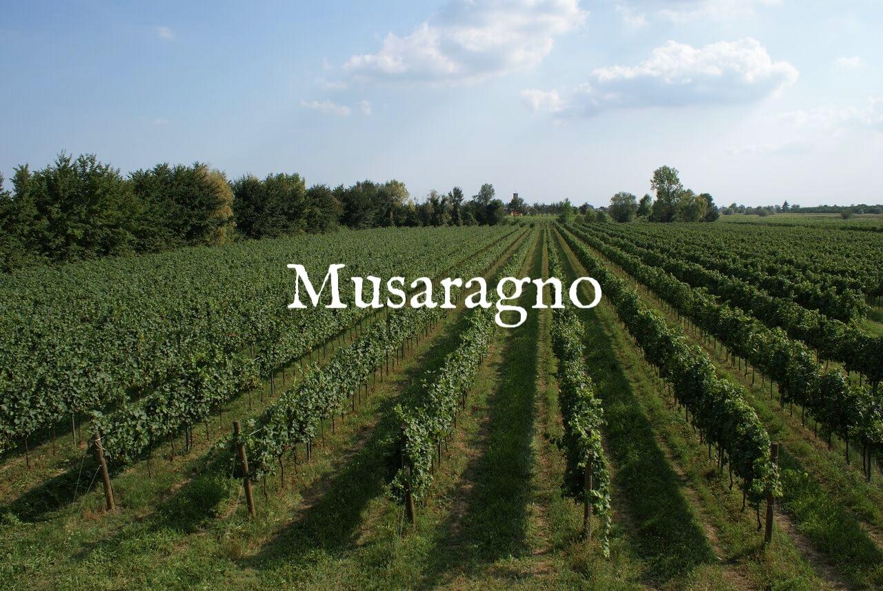 MUSARAGNO TERRA M vineyard photo 1_preview.jpg