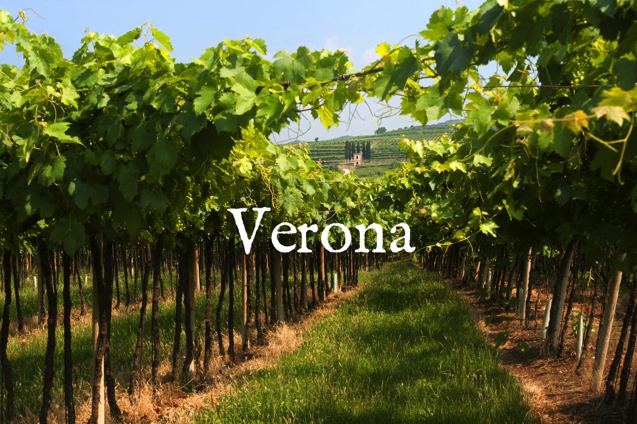 veneto-summer-vineyard-in-lessinia.jpg
