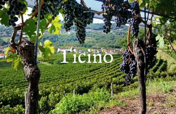 1-vineyards-mendrisiotto.jpg.2017-06-22-15-23-04.jpg