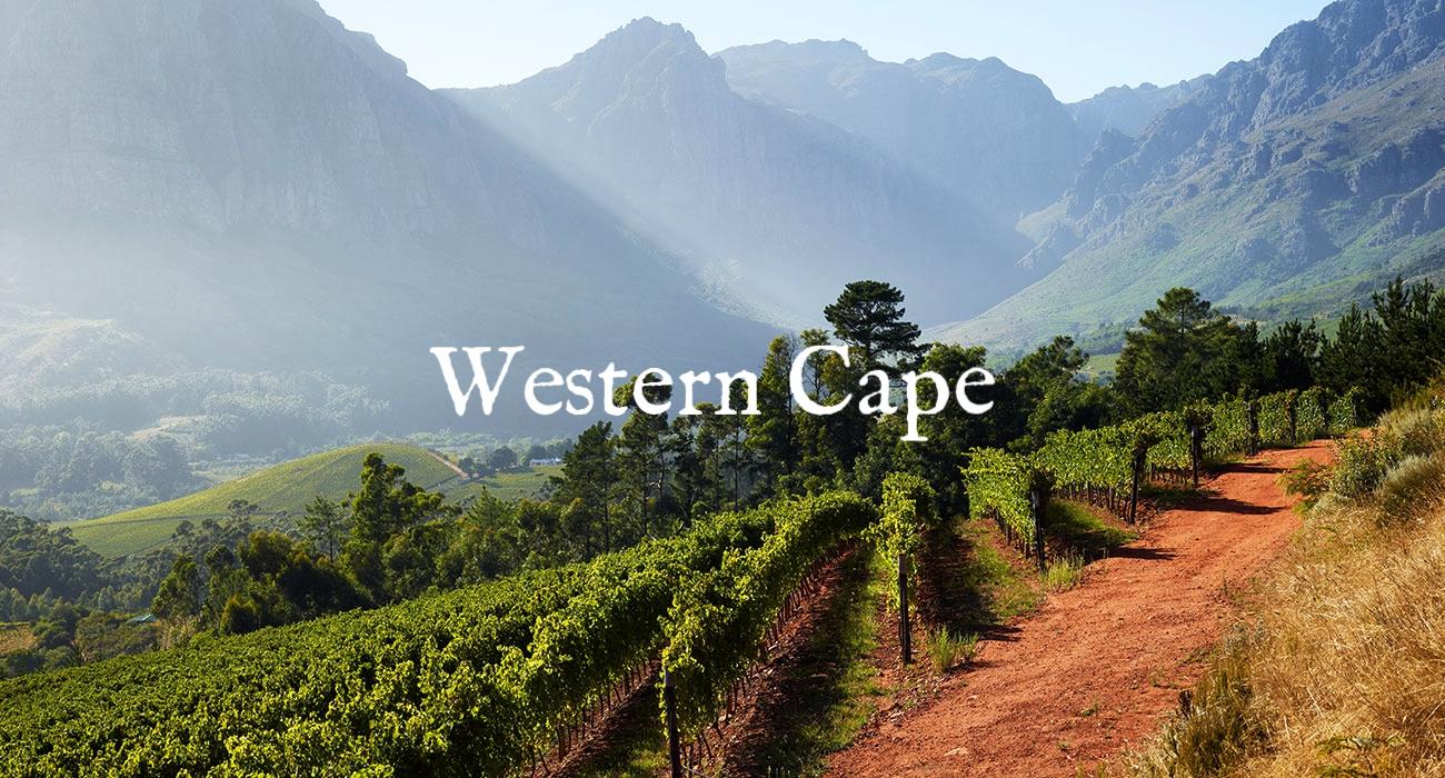 vineyards-main.jpg