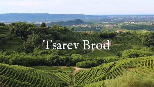 wineyard small.jpg