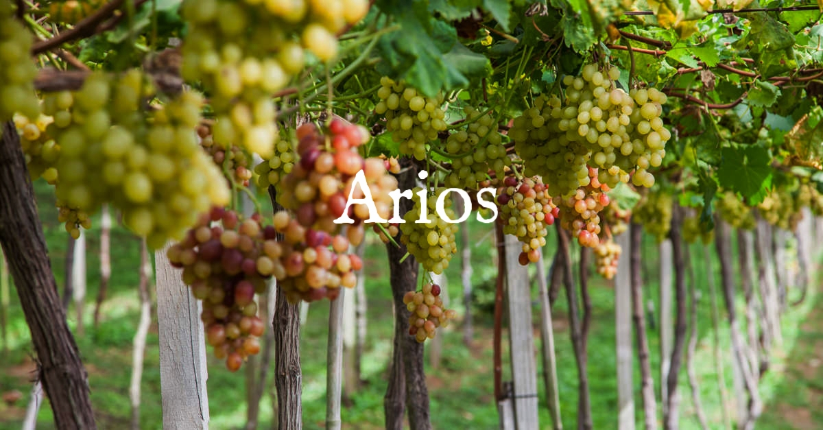 vinho-verde-social.jpg