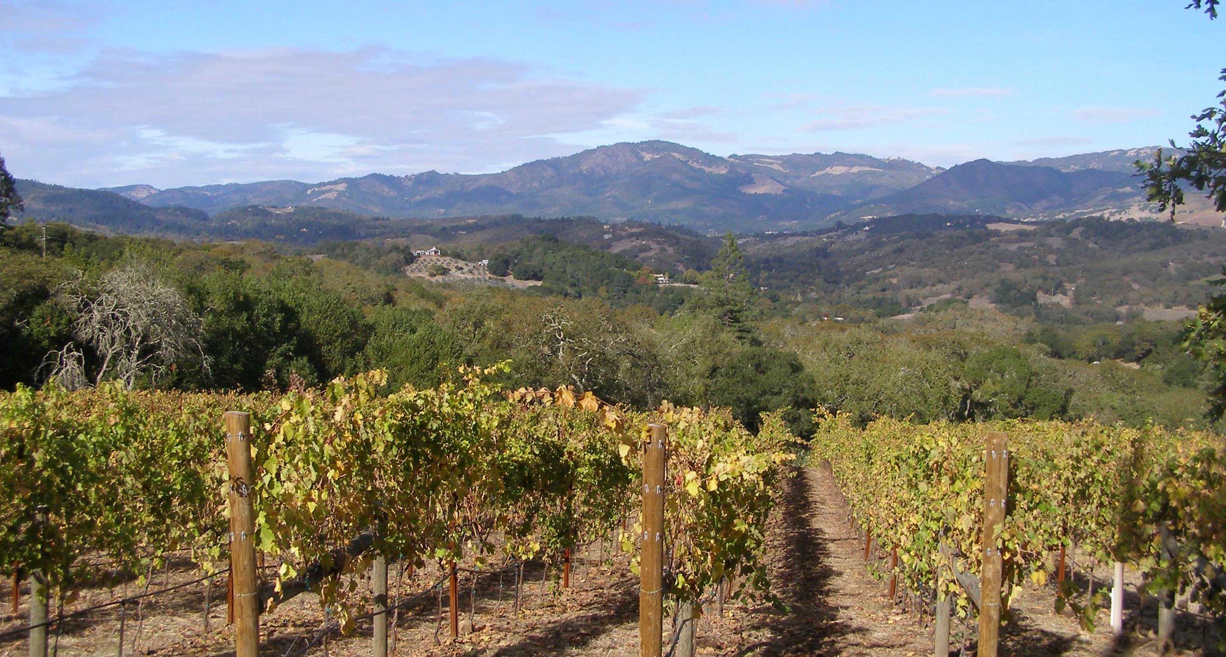 Hopland Wine Country.jpg