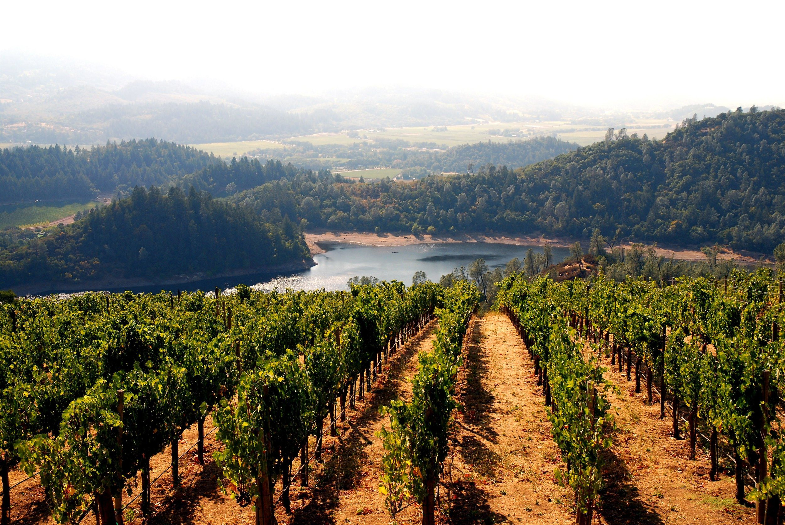 Hopland Wine Country 3.jpg