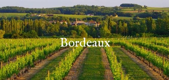 1b788d669c752e1132ff0b922c036cef--bordeaux-france-vineyard.jpg