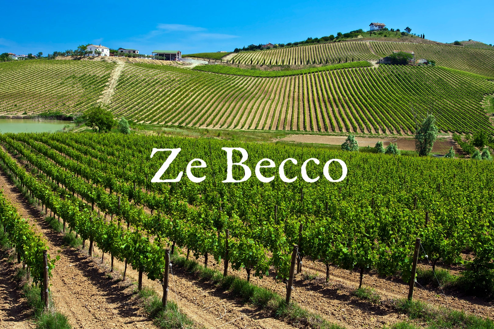 giuseppeandreamosca-vineyards.jpg