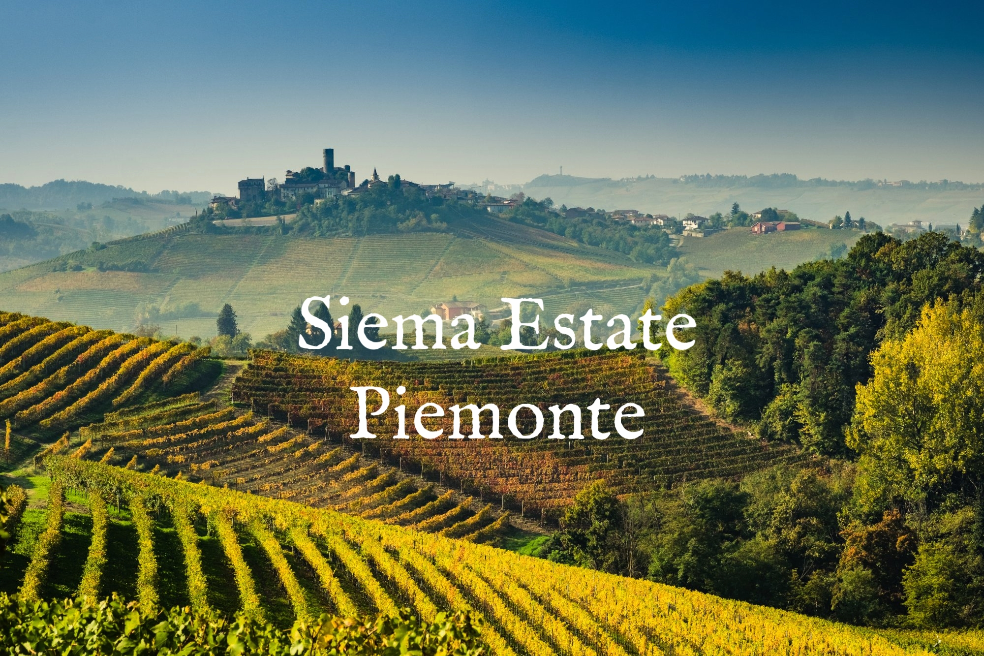 piedmont-vineyards-harvest-e1489160835566.jpg