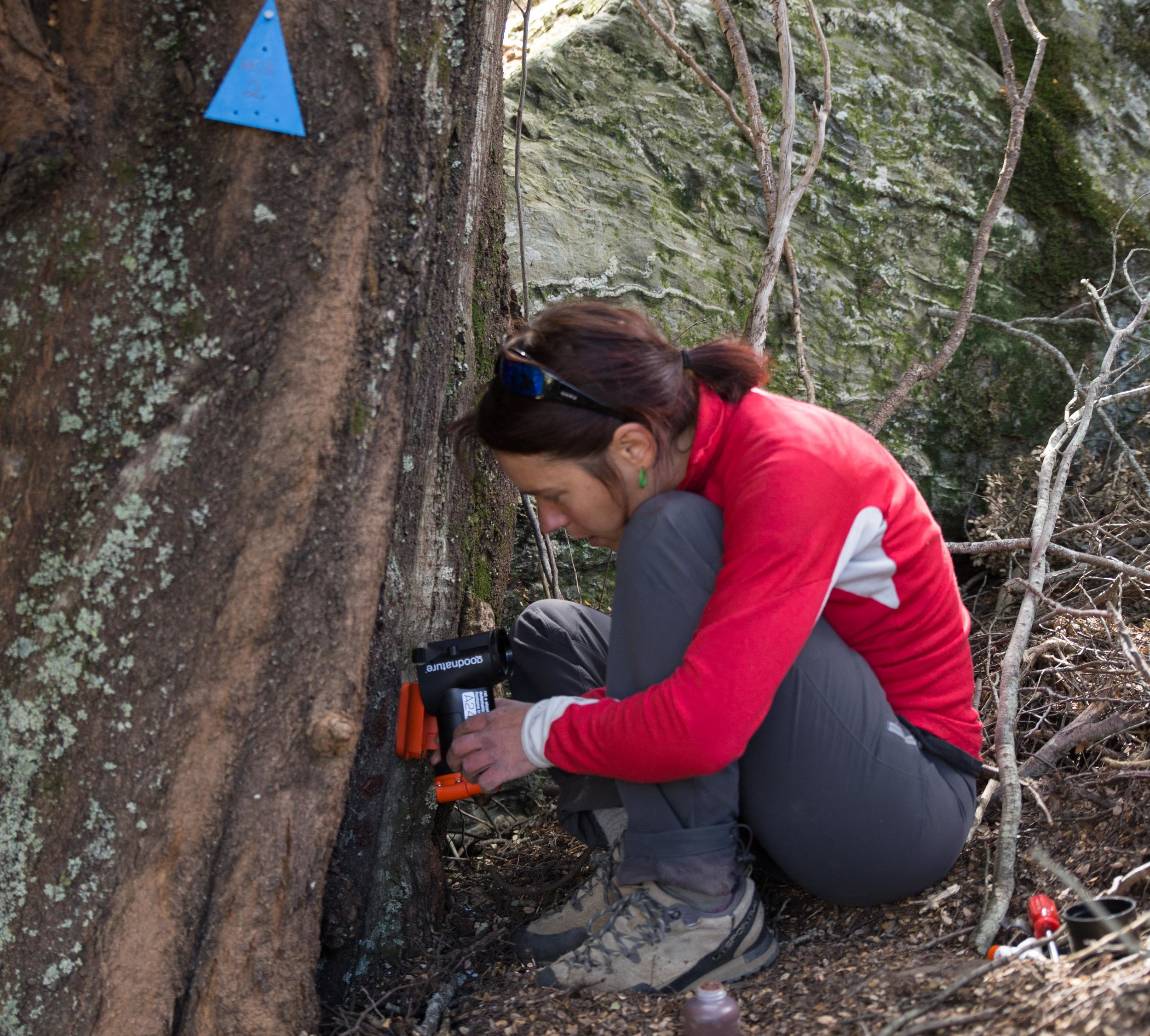 Volunteer Estelle setting a Good Nature trap in Wye Creek.Photo Credit: Phil Green