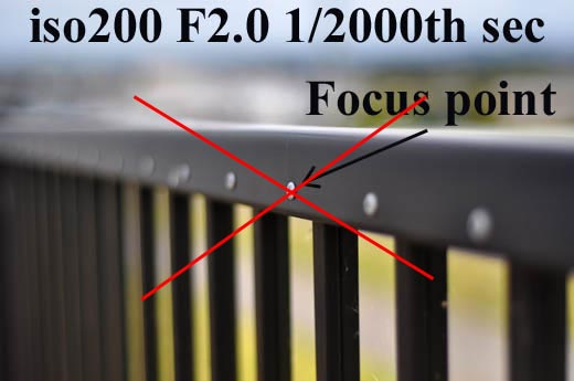F2.0DSC_2005lines.jpg
