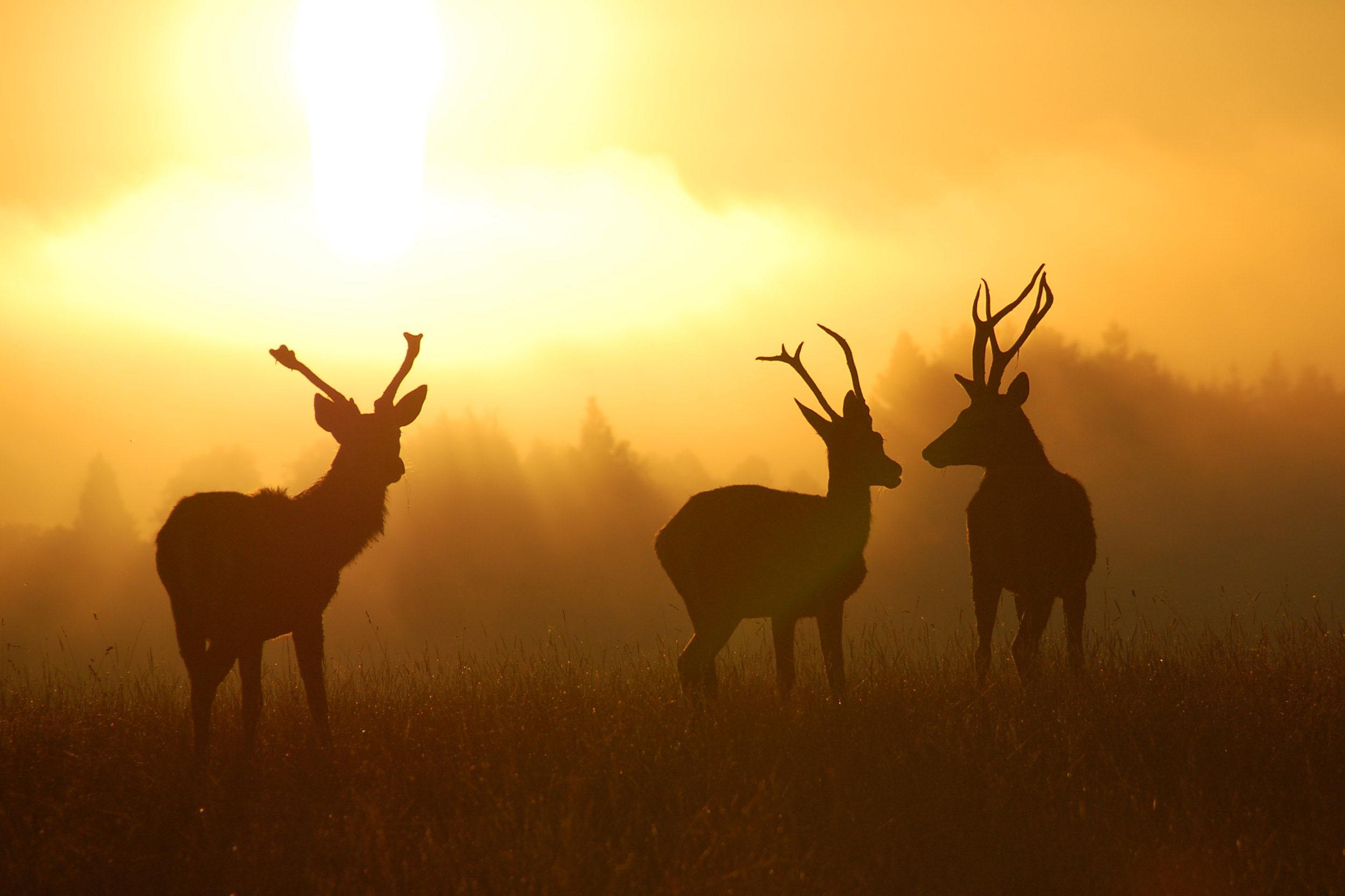 deer 005c.jpg
