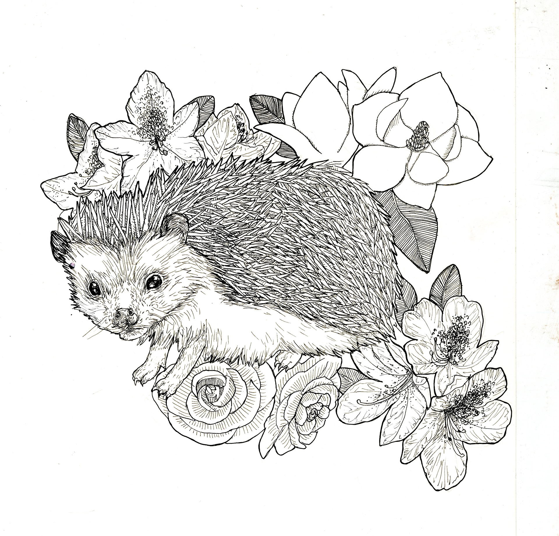 Midge with favorite flowers - Ink & Paper