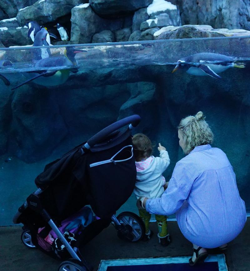 Zoo-time.jpg