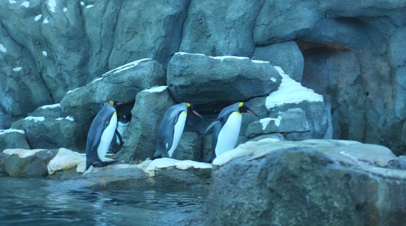 Calgary-Zoo.jpg