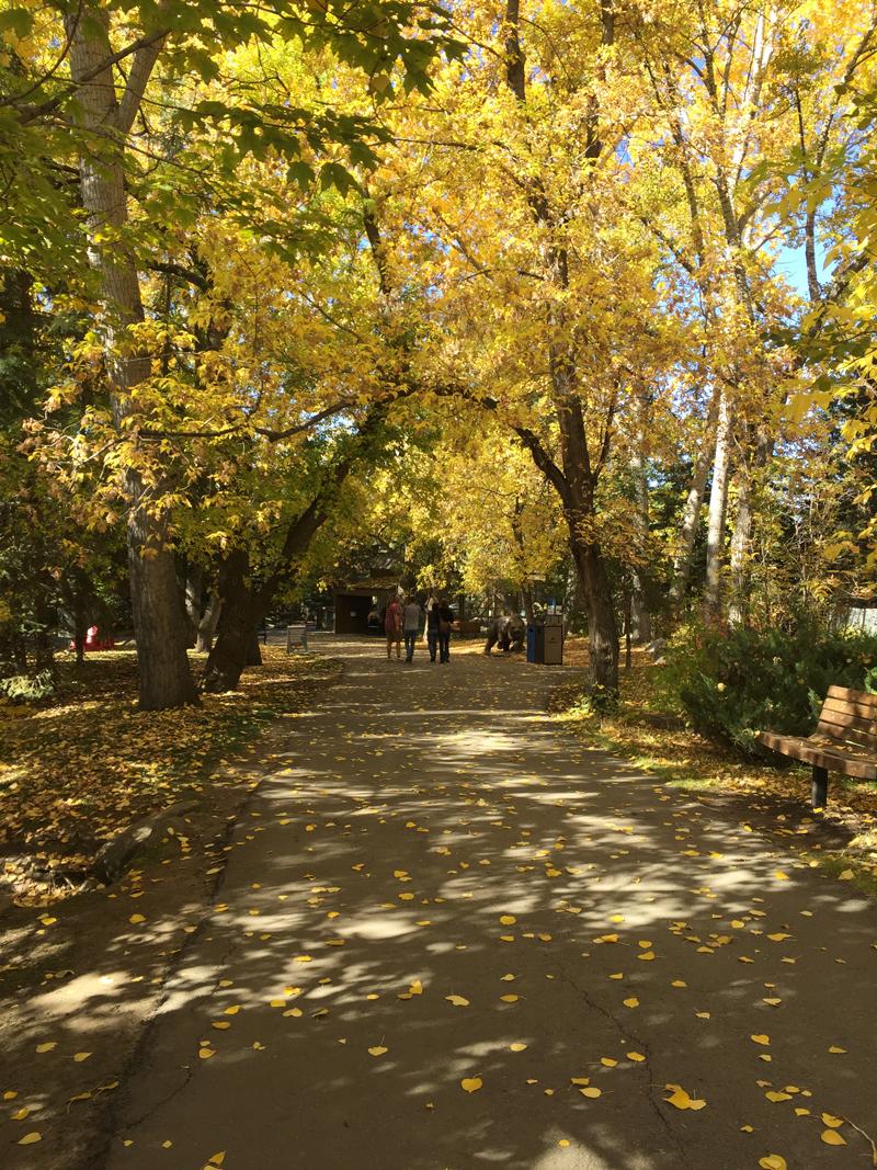 Autum-Calgary-Zoo.jpg