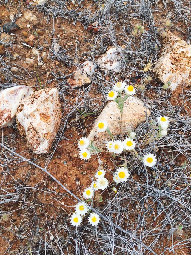 Girl in the Pjs Central Australian Wild Flowers