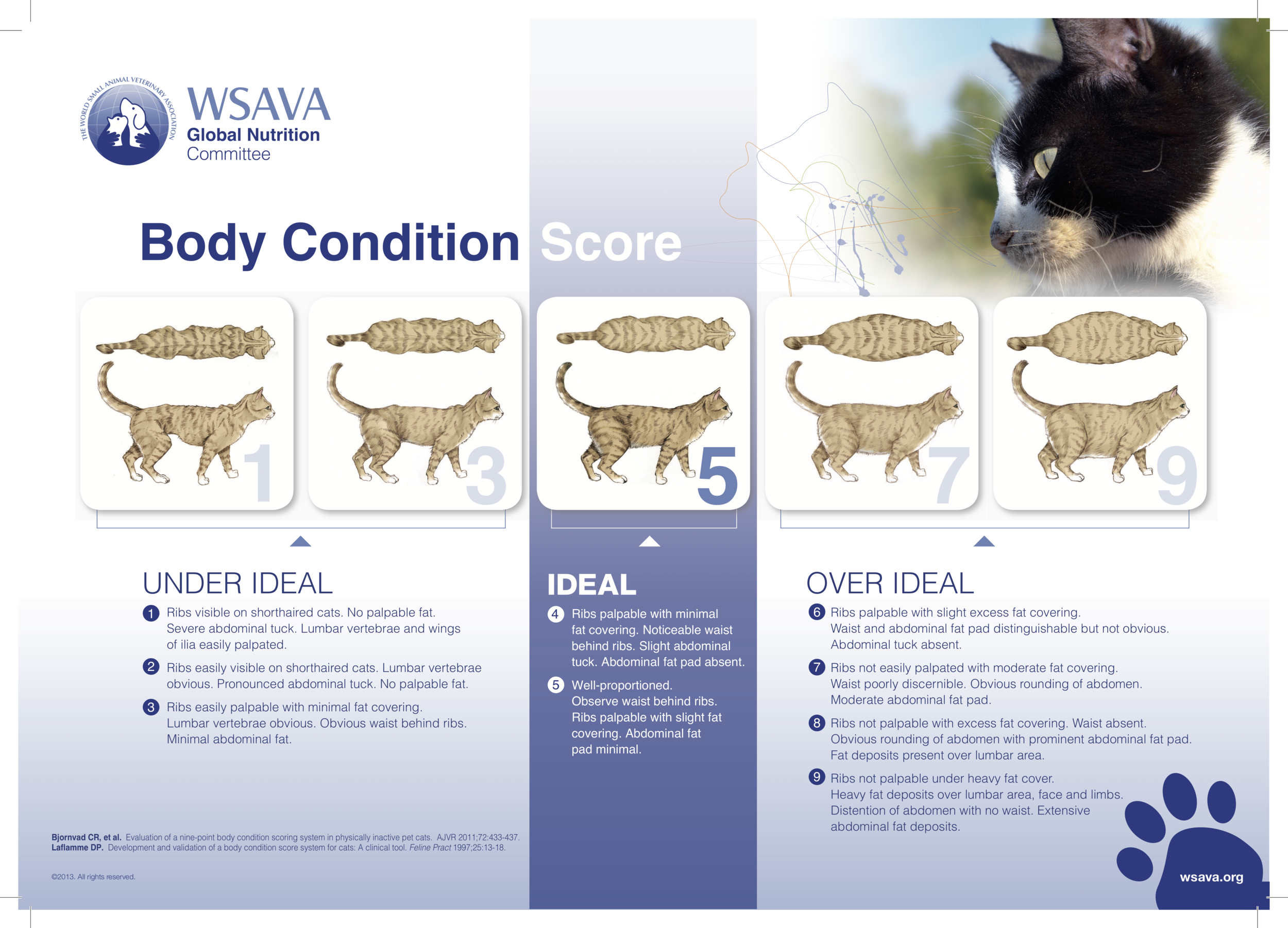 Body condition score chart cats.png