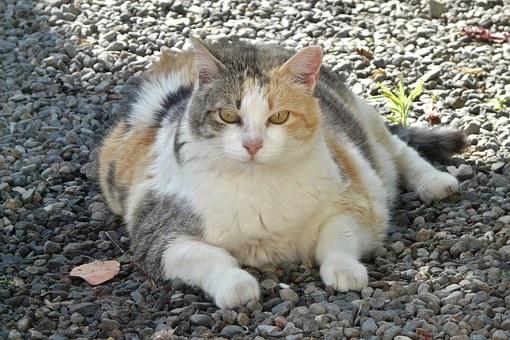 lucky-cat-1196761__340 2.jpg