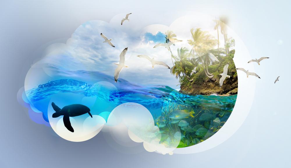 Lustre_AA_Hawaii_Board30524.jpg