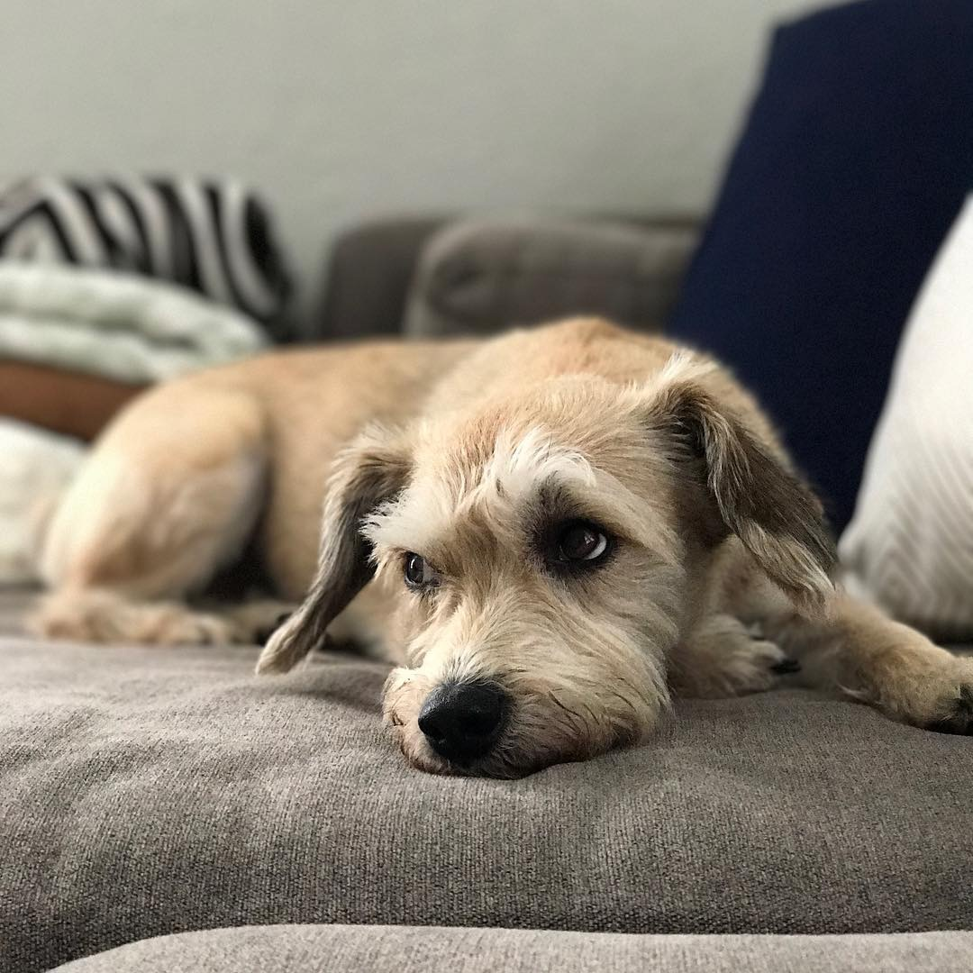 Ollie dog.
