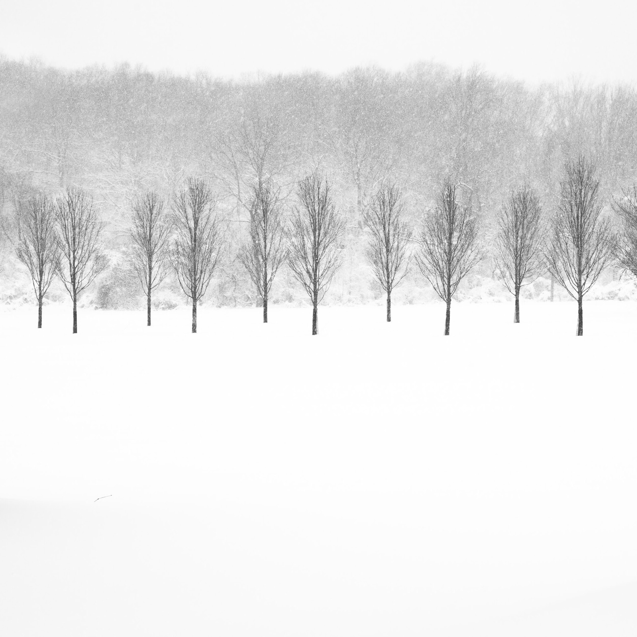 A Row of Trees - ©John Guillaume - f11, 1/125 sec, ISO 160
