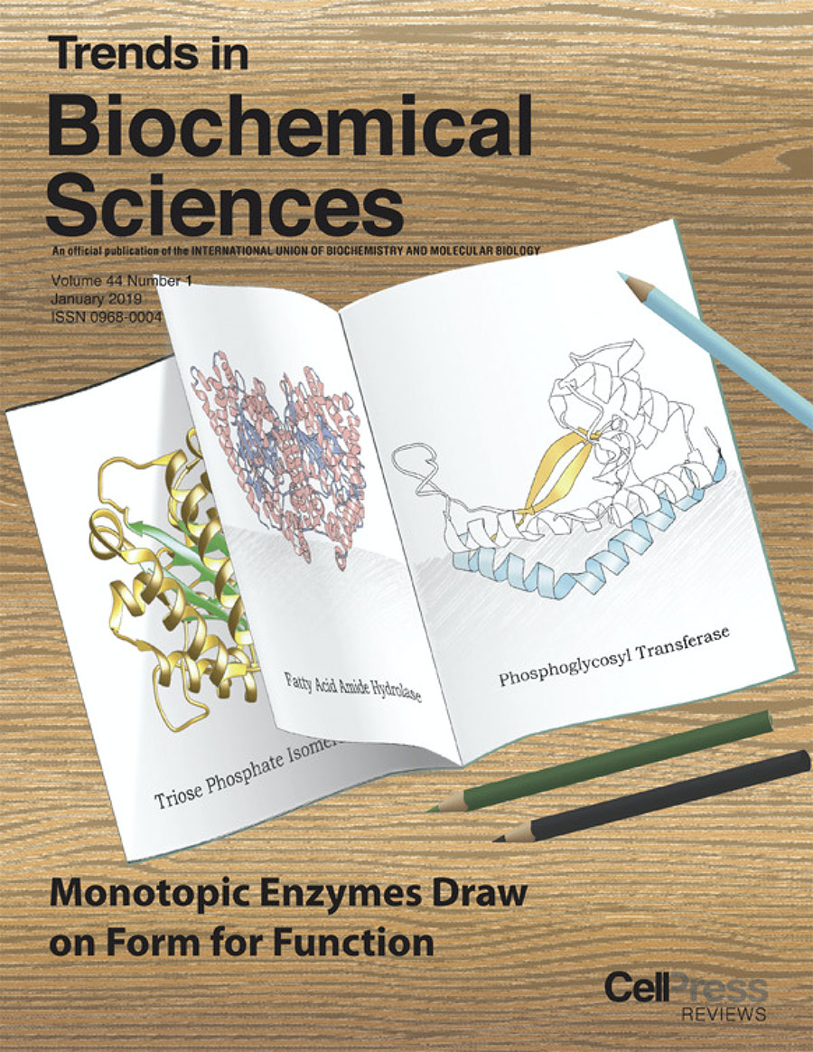 """Monotopic Membrane Proteins Join the Fold"", Allen, K.N.; Entova,, S.E.; Ray, L.C.; Imperiali, B.,  Trends Biochem. Sci.   2019 ,  44 , 7-20."