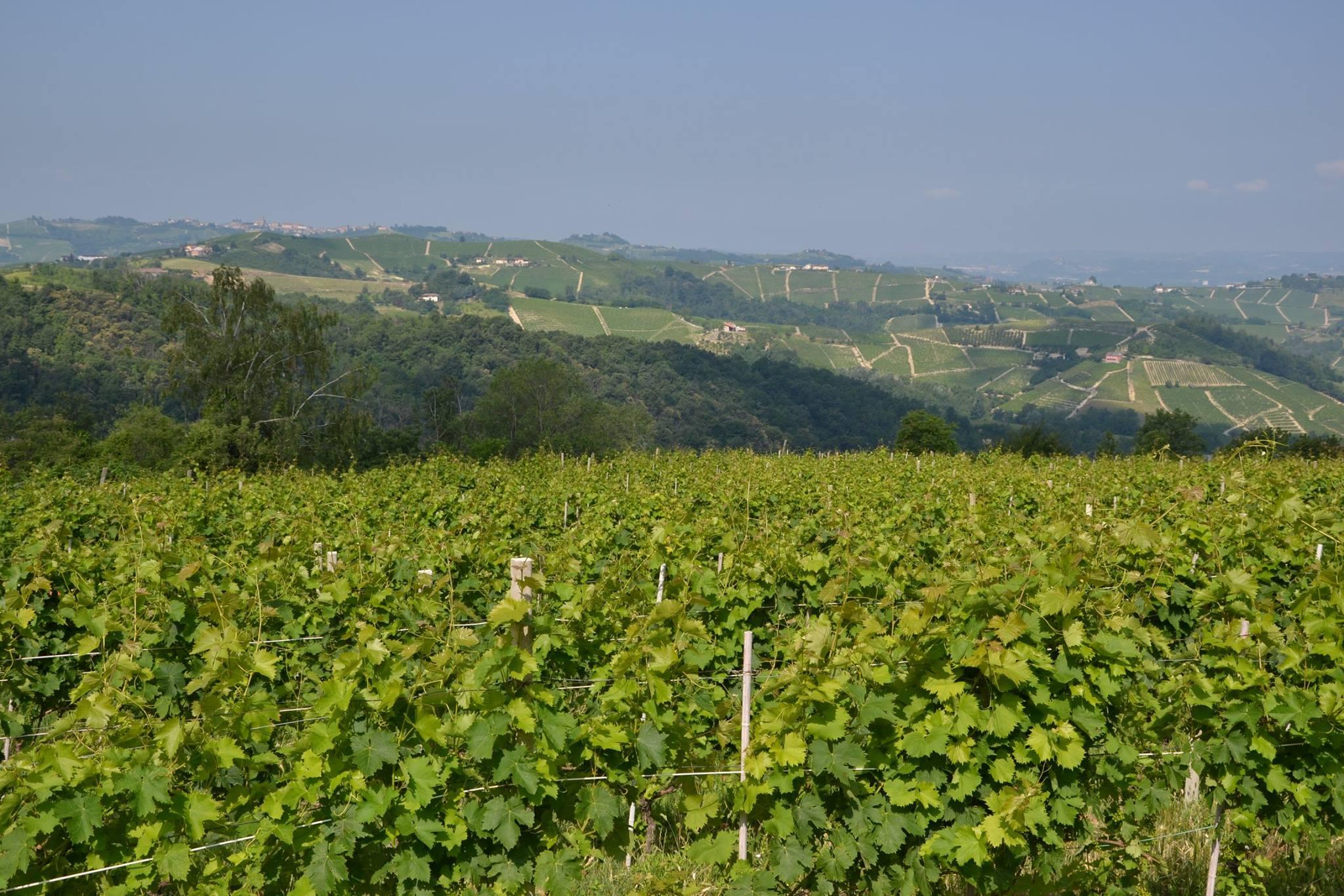 Over the Vineyard.jpg