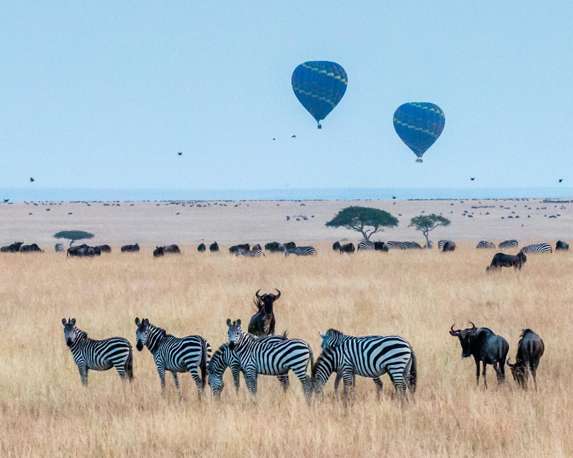 Kenya Africa Safari.jpg
