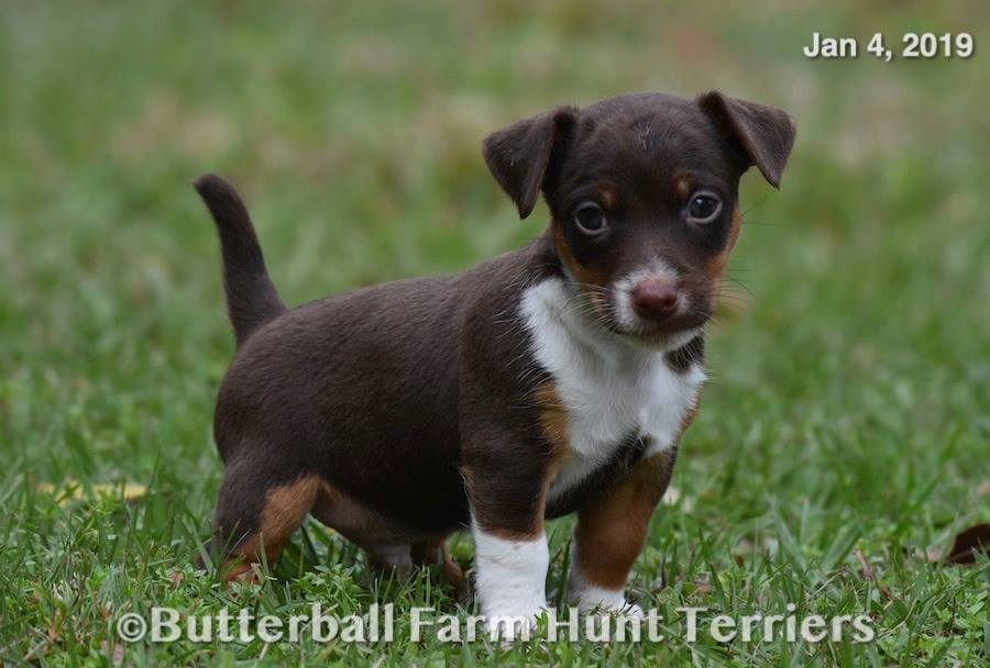 star-and-chip-pup-male-02h.JPG