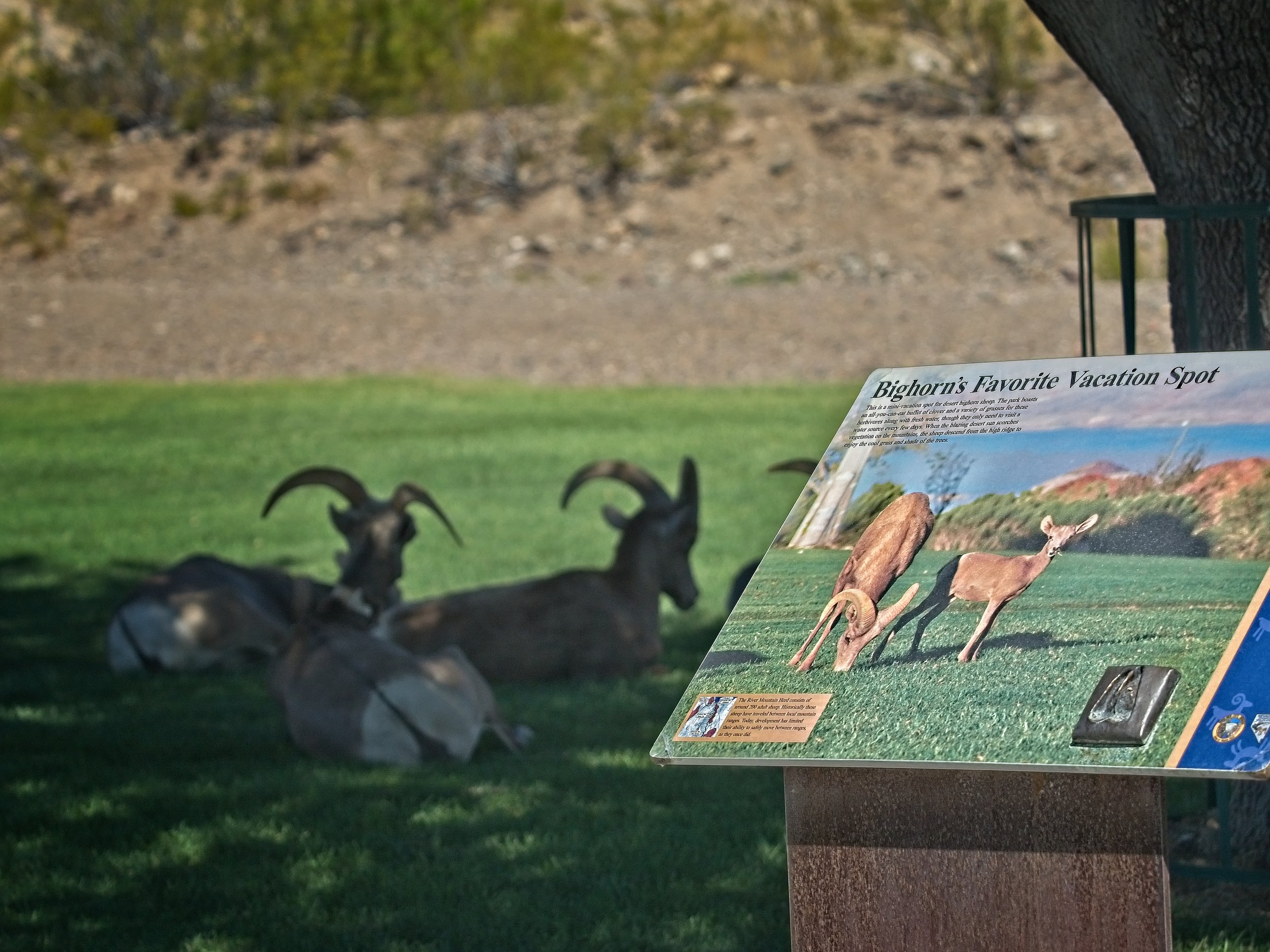 Shade trees and cool grass… Definitely a Bighorn vacation spot!